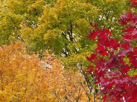 feuilles d'été