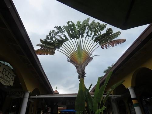 Radar plante