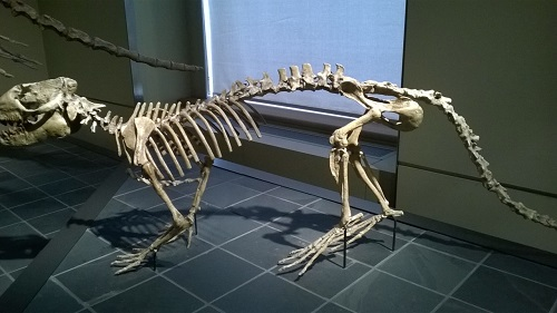 Squelette d'Hitler