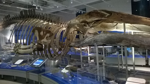 galerie des fossiles