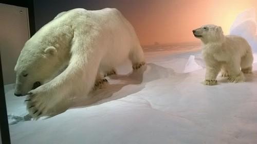 Deux ourses polaires