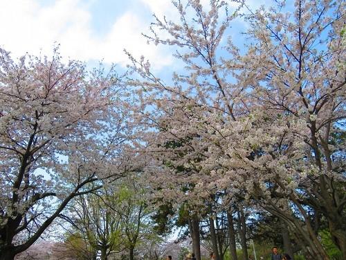 Fleurs navarreNavarre, fleurs du printemps