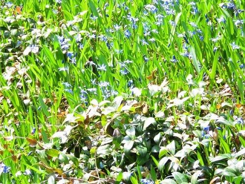 Fleurs Québéc