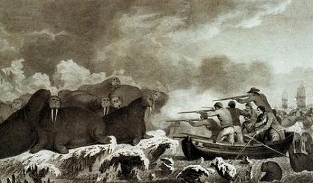 Les compagnons de voyage de James Cook chassent le morse (ou le cheval marin) pour se ravitailler en viande fraîche. La chasse aux morses au large d'Alaska, dessin de John Webber.